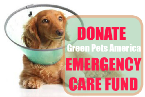 donation for dog