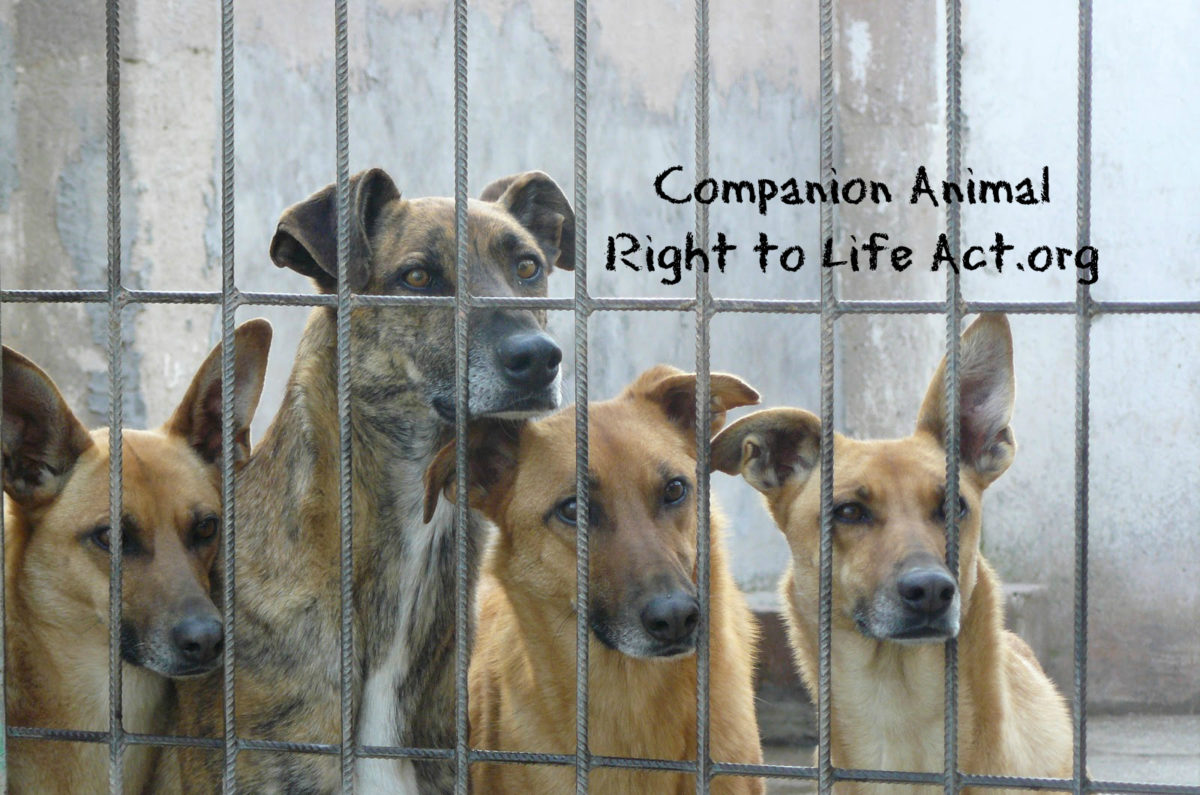 Companion Animal Right to Life Act