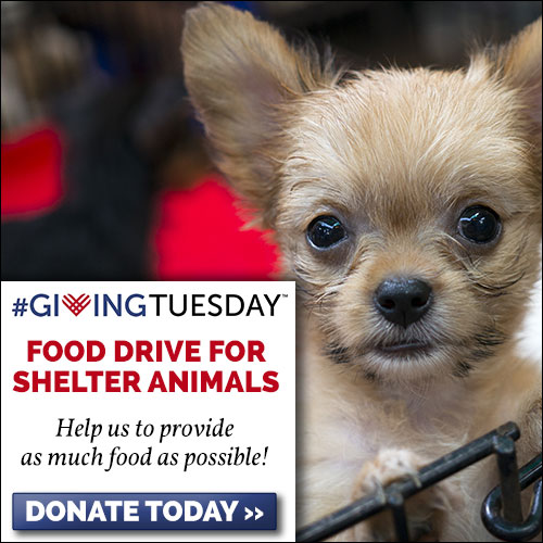 Giving Tuesday Please Support Green Pets America Charities