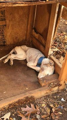 Clayton County Georgia Dog Starved to Death