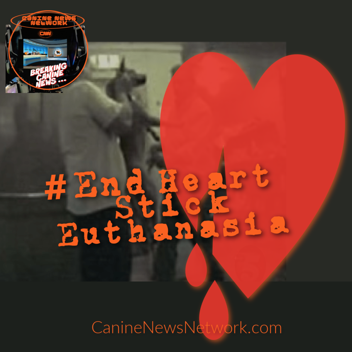 What is Heart Stick Euthanasia