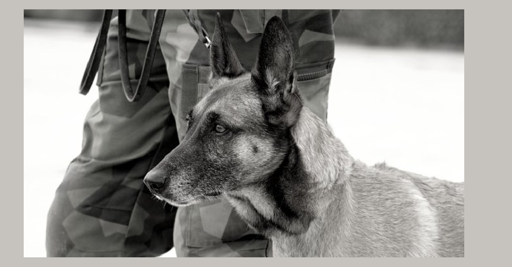 Contract K-9 soldiers left behind in Kabul